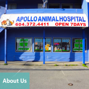 Apollo Animal Hospital About Us