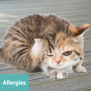Apollo Animal Hospital Cat Allergies and Dog Allergies