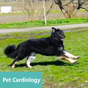 Pet Cardiology at Apollo Animal Hospital