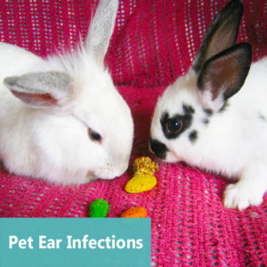 Pet Ear Infections at Apollo Animal Hospital
