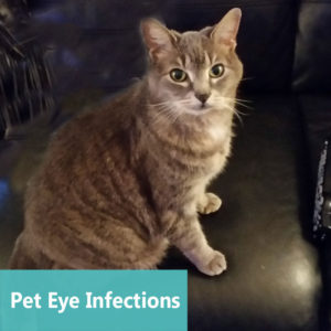 Pet Eye Infections at Apollo Animal Hospital