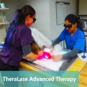 Apollo Animal Hospital TheraLase ~ Advanced Therapy Laser